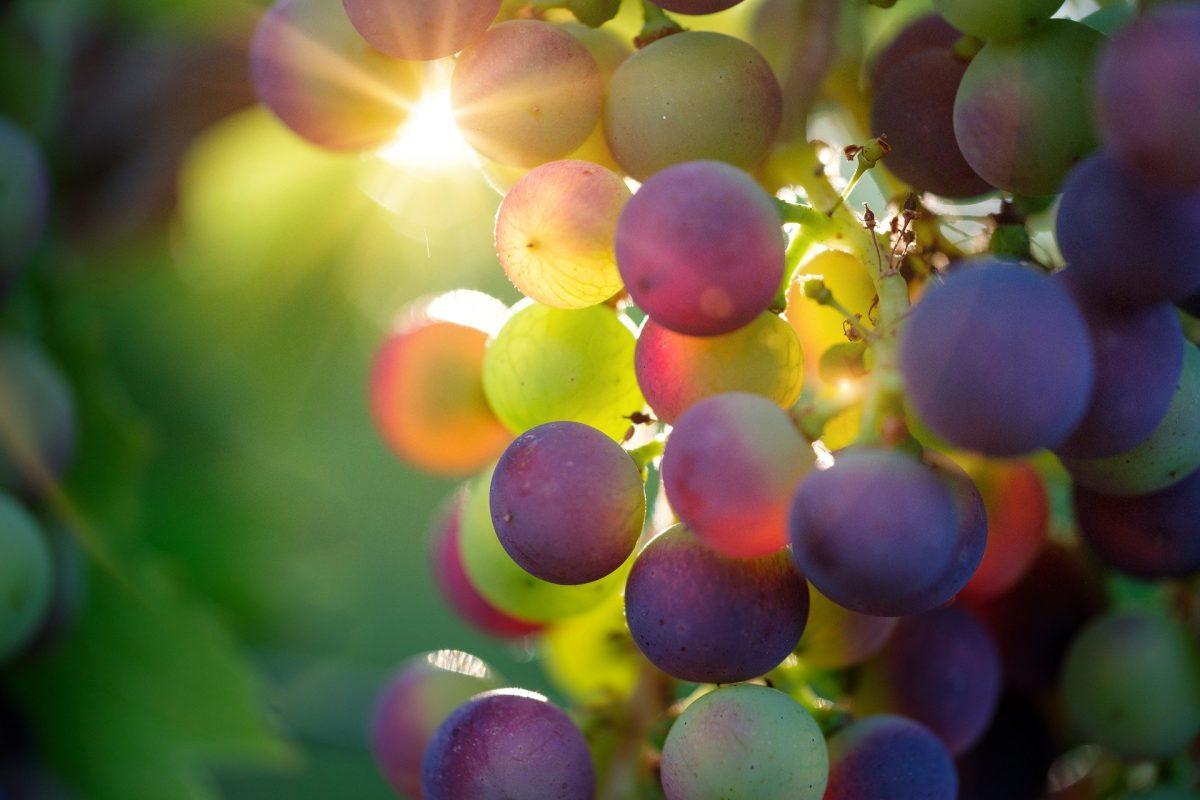 Andens frukt